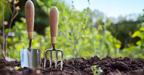 Trees, plants Ravine Gardens news – PluggedInto